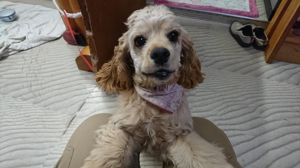 甘えん坊の迷い犬